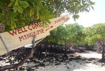 レンボンガン島/Lembongan マングローブの村/mangrove / レンボンガン島&マングローブの村