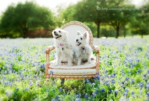 Sweet Pets / by Debbie Urbanczyk