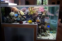 Beautiful Marine Aquariums / At www.completaquatics.co.uk . We love inspiring our customers with beautiful marine aquariums, such as the ones on this board!