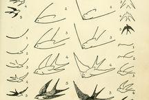 dieren tekenen