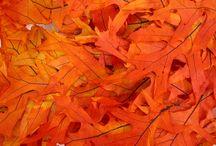 Transparent Oak Leaves