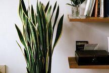Växter / Växter inomhus