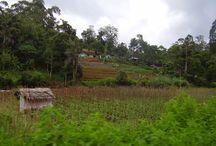 Sri Lanka : Kandy et les montagnes / Entre Kandy et Ella, la montagne reprend ses droits ! Entre plantations à perte de vue, jungles et sommets à plus de 2000 mètres de haut !