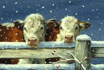 Cows!!!!! / by Cynthia Riza