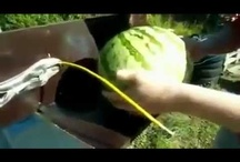 What happens to electricity are provided watermelon