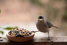 Animal Behavior / by Pam Thompson