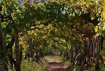 les vignobles autour du monde / A la découverte des vignobles dans le monde entier