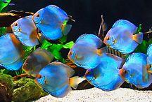 king of the aquarium / by Bob Wiedemann