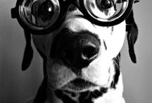 Dogs <3 / Ο μοναδικός φίλος που ξέρει να συγχωρεί...