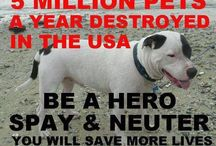 Spay & Neuter / The importance to get your dog or cat spayed and neutered. www.sosarl.org
