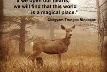 Quotes / by Shambhala Mountain Center