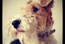 Bertie's life in pictures!
