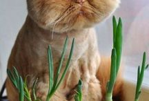 FF_cats