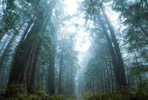 Landscape woods