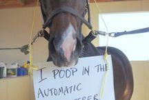 Horse Life!! / horses