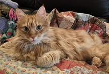 Cats and Quilts / So often I see pictures of cats and quilts ... they seem to go together perfectly.