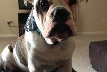 Ammo our Bully!  / by Megan McCracken