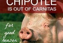 Animals: Farm