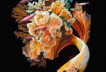 Картины рыб