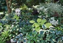 Planning my garden / Gardening
