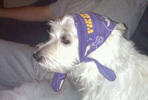 Minnesota Vikings TAILgaters / Minnesota Vikings Dog Pictures, Ideas, & fun Products / Merchandise