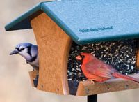 Bird Feeders / Ways to feed birds, feeders, types of seeds and bird foods and diy projects to try for our winged friends. http://winged-friends.com