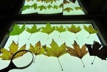 Work........autumn