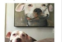 Funny photos / Are you having a bad day? You have to see this!!