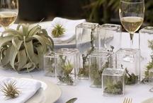 Summer Weddings / Inspiration for your summer wedding.