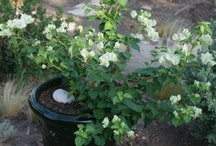 Spring/Summer Balcony Planters