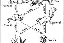 Biodiversity / Grade 3