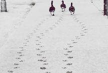 Animals / by Stephanie Howlett