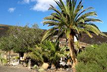 Finca Natura / The garden at Finca Natura in Lanzarote