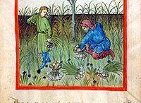 Tacuinum Sanitatis. Tratado de salud medieval