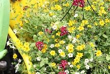 flowers 1