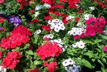 WOODLARK PLANTS LOOKING GOOD 13/07/13 / Plants that are looking this week