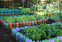garrafa pet quintal, jardim e flores