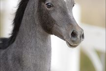Fotografie koňů