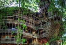 my house dreams