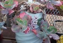 Pretty Plants & Pots