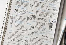 Dibujo plantas