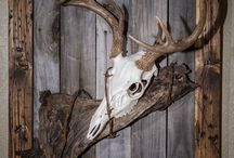 Unique Deer Mounts / Unique and creative displays of deer taxidermy and antlers.