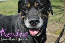 Adpotable Dogs / Check out these adorable dogs that are looking for their furever homes here at the Hamilton Burlington SPCA! http://hbspca.com/adopt/view-dogs/