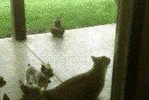 video gatti