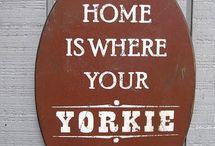 Yorkie~ville