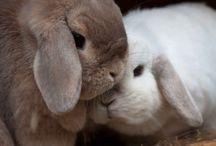 Fluffy bunnies