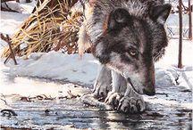 Wildlife art: Sue Gombus