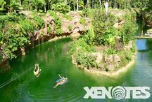 Zip Lines / Feel the breeze on your face as you slide through zip lines over the enigmatic jungle.