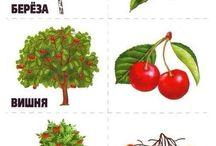 STROMY,KRÍKY,LES - FOREST, TREES, BUSH