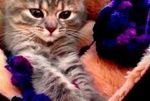 Molly / Unsere süße Katze ist eine Mischung zwischen britisch Kurzhaar und sibirischer Waldkatze. Sie ist zuckersüß, unsere Bilder möchten Sir mit euch teilen.